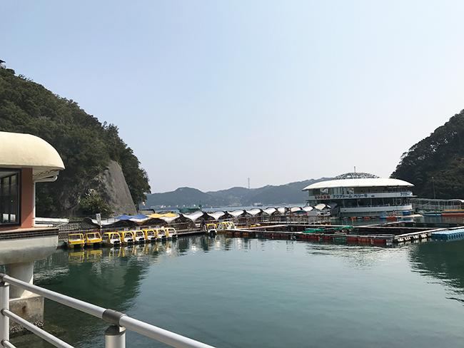 下田海中水族館でイルカショーを見に行ってきたブログ!